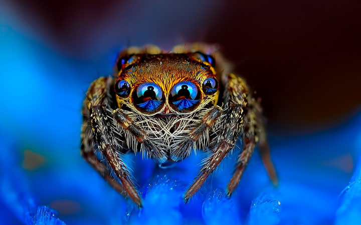 Discover the Beauty Of Spiders Through Microscopic Photographs-23