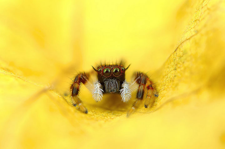 Discover the Beauty Of Spiders Through Microscopic Photographs-5