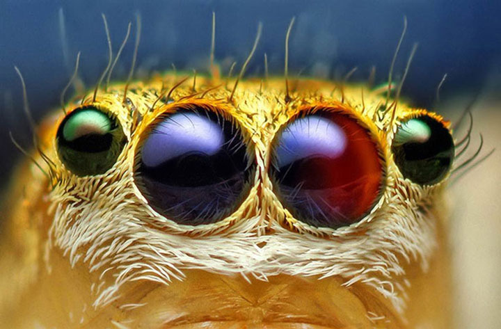 Discover the Beauty Of Spiders Through Microscopic Photographs-6