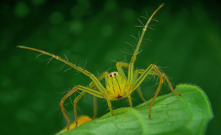 Discover the Beauty Of Spiders Through Microscopic Photographs-7