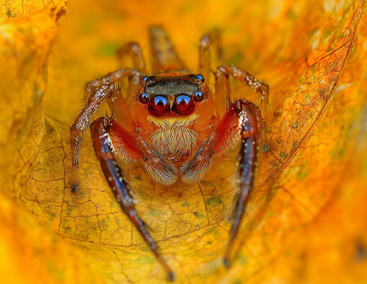 Discover the Beauty Of Spiders Through Microscopic Photographs-8