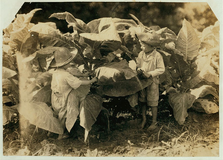 4 and 6 years old boys cleaning tobacco leaves in Kentucky-20 Photographs Showing The Child Labor Conditions In Early Twentieth Century-5