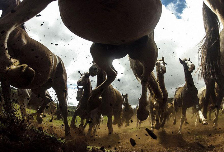The power of Criollo horses-Top 21 Extraordinary Photographs That Will Make You Admire Wildlife Beauty-4
