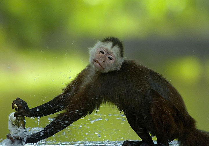 A monkey making her toilet -Top 21 Extraordinary Photographs That Will Make You Admire Wildlife Beauty-7