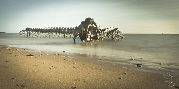 A Giant Aluminium Made Skeleton Of Serpent On the Beach of Loire, France-1
