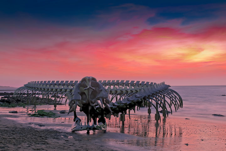 A Giant Aluminium Made Skeleton Of Serpent On the Beach of Loire, France-5