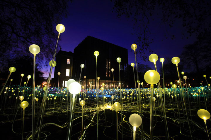 Enjoy A Walk Through The Lavish Garden Lights of Bruce-