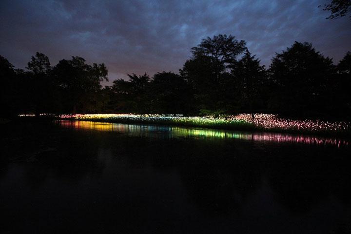 Enjoy A Walk Through The Lavish Garden Lights of Bruce-14