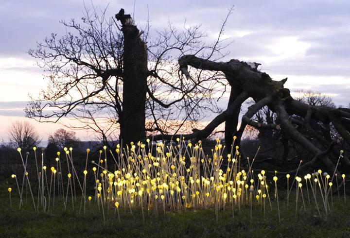 Enjoy A Walk Through The Lavish Garden Lights of Bruce-15
