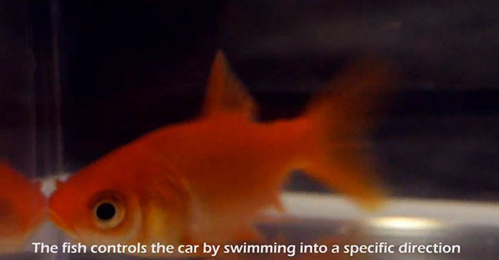 Engineers Invent A Mobile Aquarium Driven By The Movements Of Fish (Video)-3
