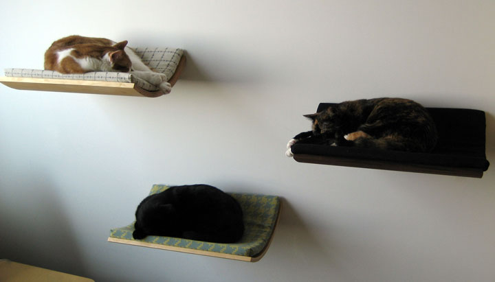 The cat shelves-Furniture Designs To Make Your Apartment An Animal paradise-13