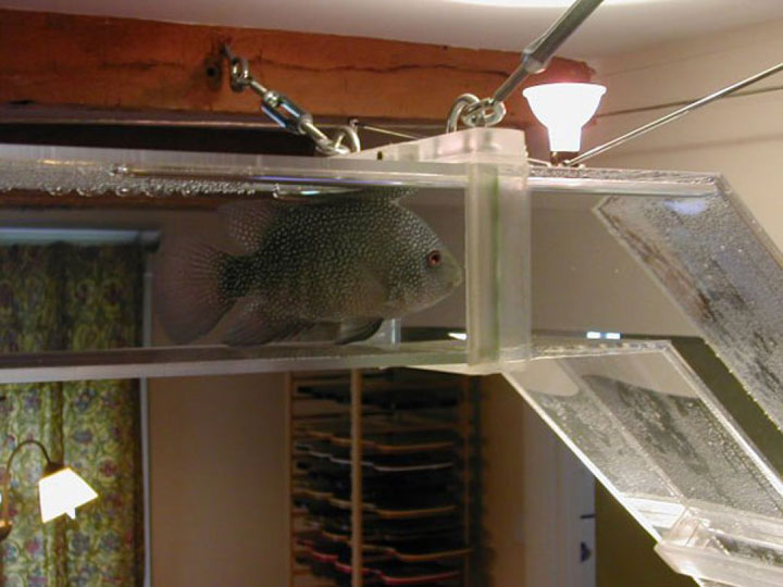 The suspended aquarium-Furniture Designs To Make Your Apartment An Animal paradise-17