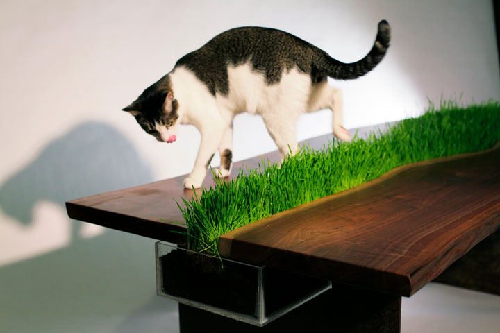 A natural greenery table for cats -Furniture Designs To Make Your Apartment An Animal paradise-2