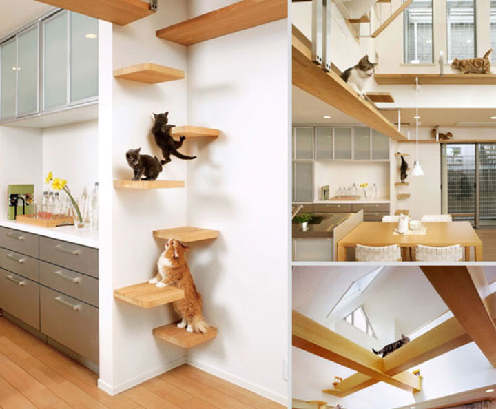 Hanging shelves for cats-Furniture Designs To Make Your Apartment An Animal paradise-21