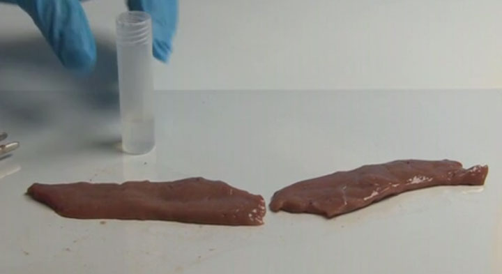 A Super Glue That Quickly Connects Human Tissue Will Revolutionize Surgery (Video)-3