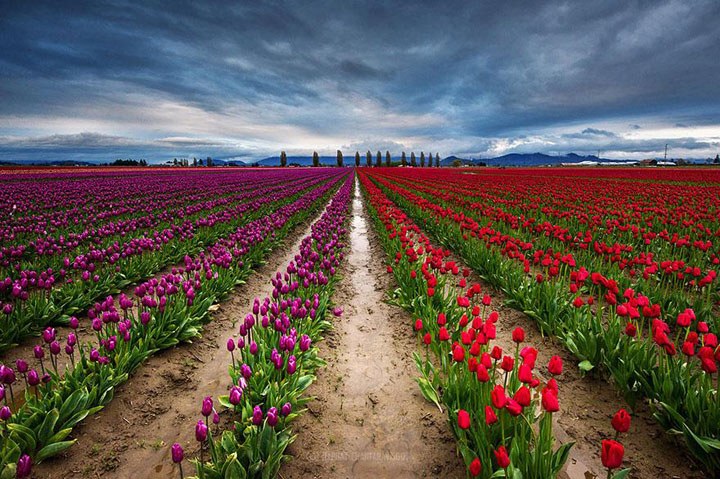 Celebrate The Arrival Of Spring With 15 Beautiful Flower Field Photos-