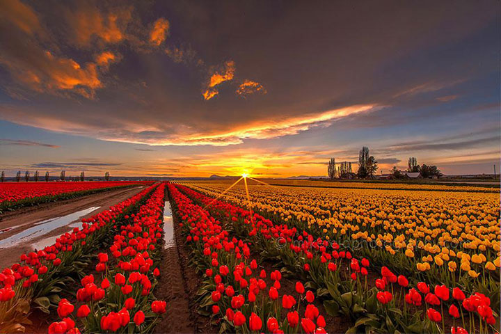 Celebrate The Arrival Of Spring With 15 Beautiful Flower Field Photos-10
