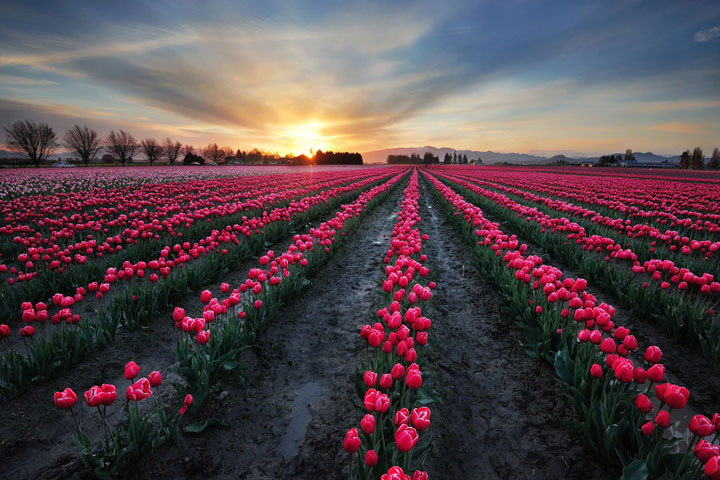 Celebrate The Arrival Of Spring With 15 Beautiful Flower Field Photos-13