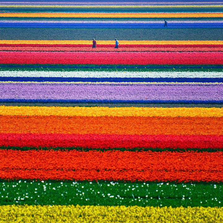 Celebrate The Arrival Of Spring With 15 Beautiful Flower Field Photos-3