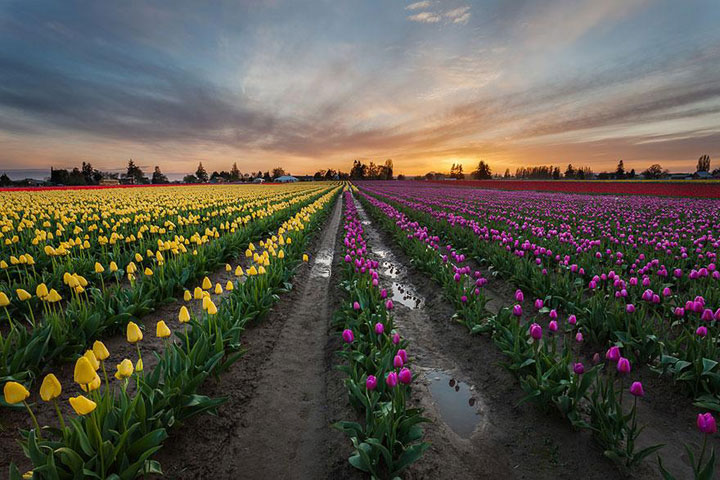 Celebrate The Arrival Of Spring With 15 Beautiful Flower Field Photos-4