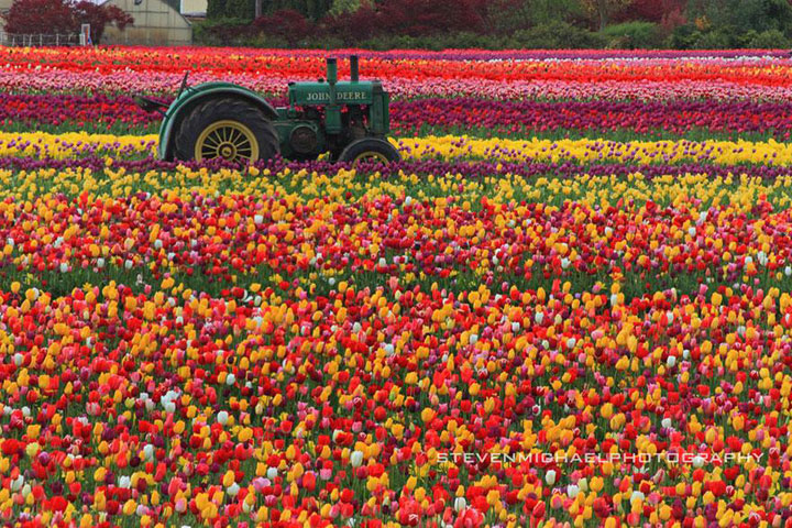 Celebrate The Arrival Of Spring With 15 Beautiful Flower Field Photos-7
