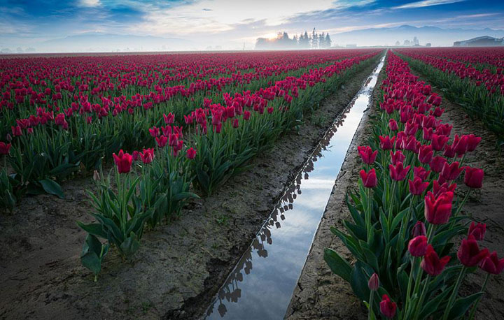 Celebrate The Arrival Of Spring With 15 Beautiful Flower Field Photos-9