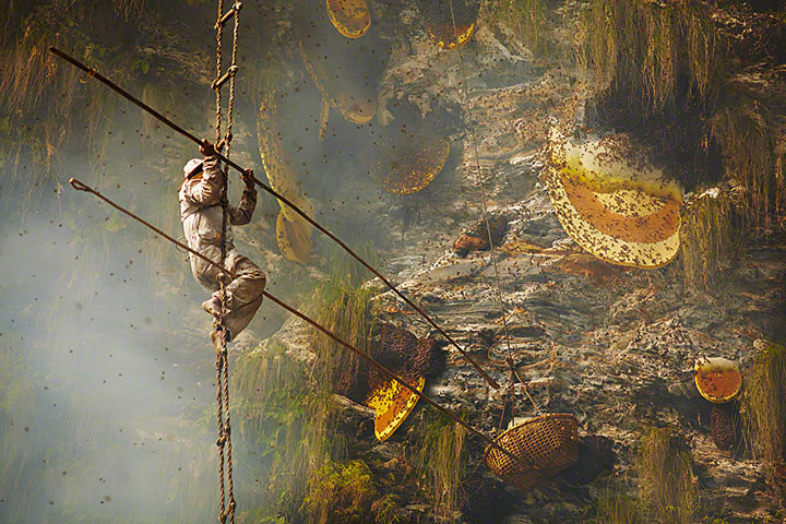 Nepalese Honey Hunter Risk Their Lives On High Cliffs To Feed Their Families -5