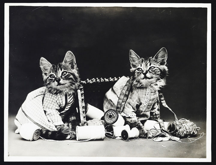 Old Is Gold-Amazing Cat Fashion From 1915 -