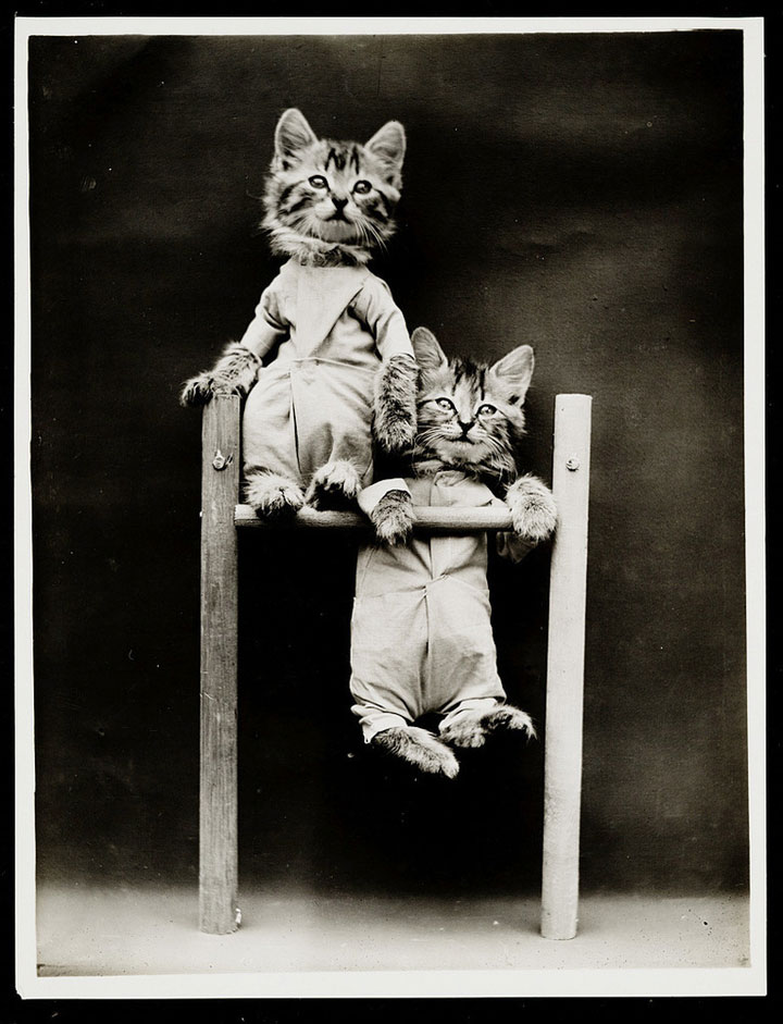 Old Is Gold-Amazing Cat Fashion From 1915 -12