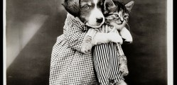 Old Is Gold-Amazing Cat Fashion From 1915 -15