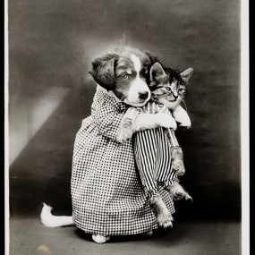 Old Is Gold-Amazing Cat Fashion From 1915 (Photo Gallery)