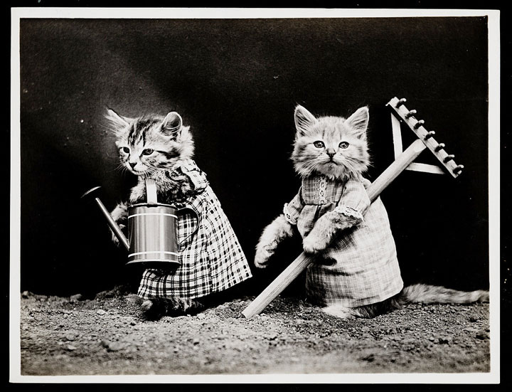 Old Is Gold-Amazing Cat Fashion From 1915 -16