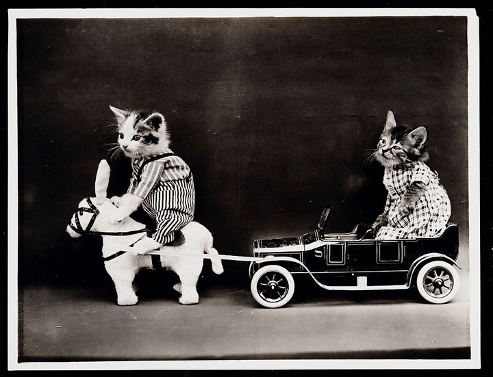 Old Is Gold-Amazing Cat Fashion From 1915 -18