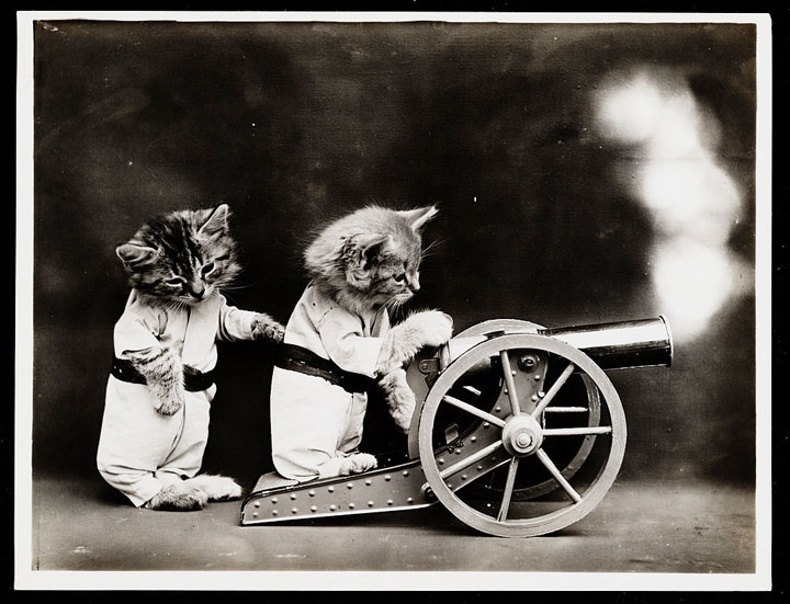 Old Is Gold-Amazing Cat Fashion From 1915 -3