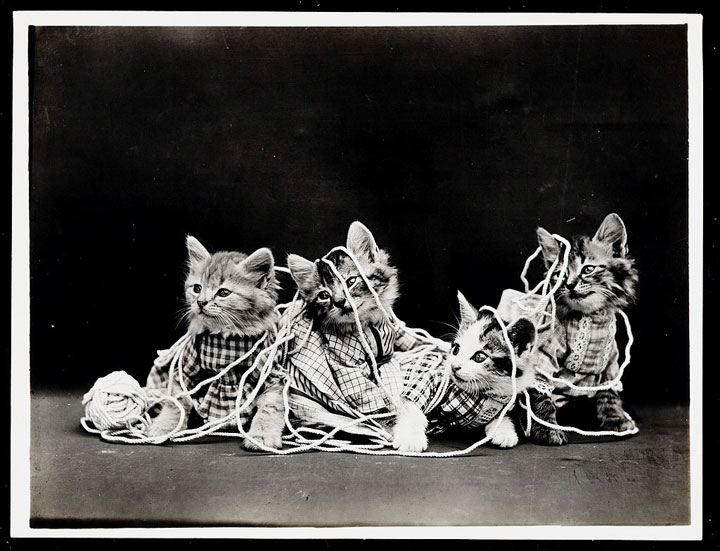 Old Is Gold-Amazing Cat Fashion From 1915 -6