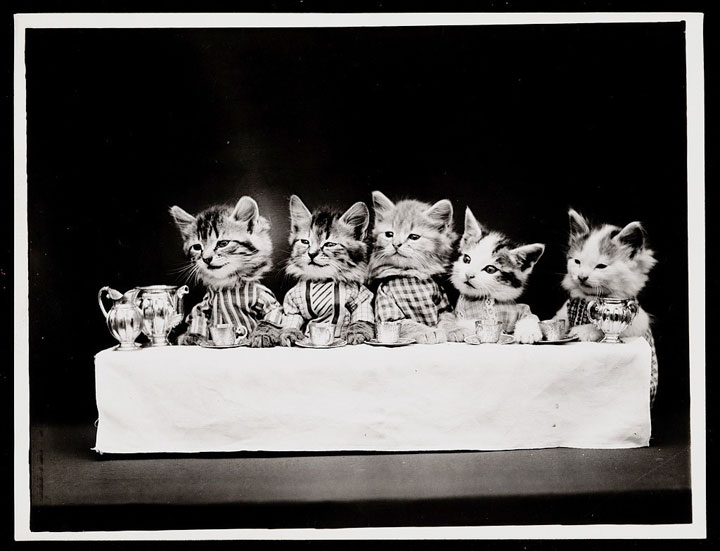 Old Is Gold-Amazing Cat Fashion From 1915 -7