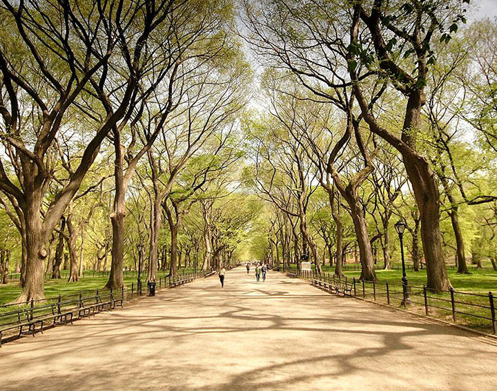 Central Park-The real surroundings Of Famous Tourist Destination Monumentsstcard-21