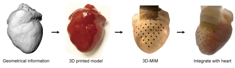 This Membrane Can Make Human Heart Beat Outside Of body-