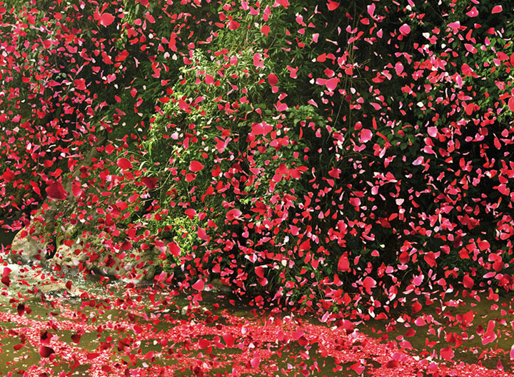 Amazing Spectacle 8000000 Flower Petals Falling On A Small Village-2