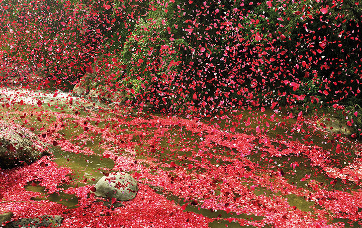 Amazing Spectacle 8000000 Flower Petals Falling On A Small Village-5