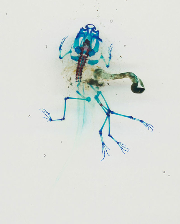 Reliquaries: Stunning Portraits Reveal Malformations In Frogs And Tadpoles-7