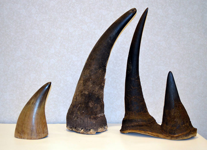 Rhino horn-The World's 17 Most Costly Substances-4