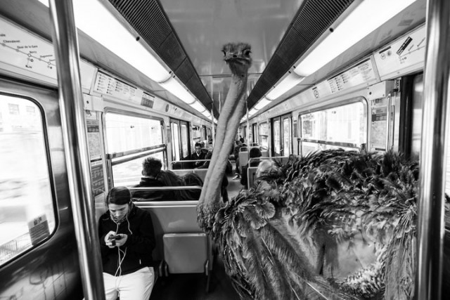 Animals Of Savannah In Paris Metro-2