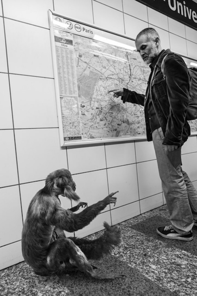 Animals Of Savannah In Paris Metro-6