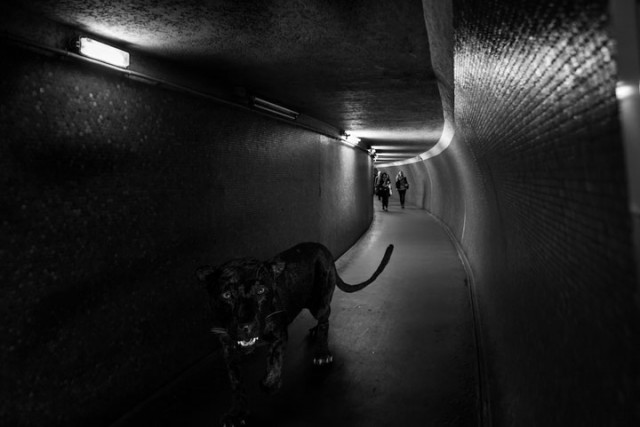 Animals Of Savannah In Paris Metro-9