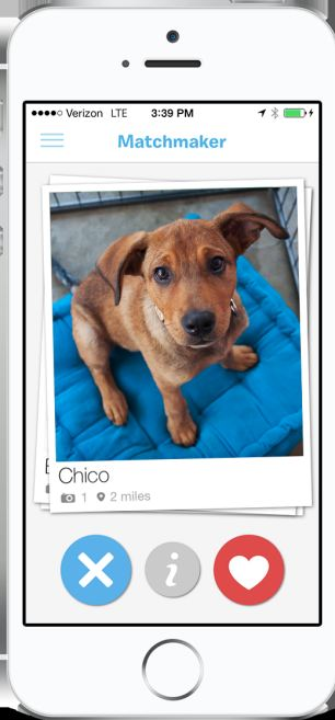 Minster like app for dogs