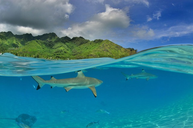 Moorea, French Polynesia-Stunning Photographs From National Geographic Photo Contest 2014-9