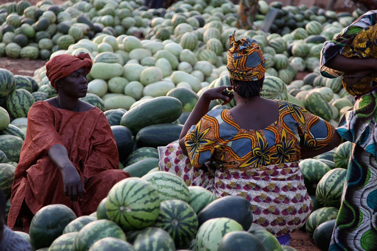 African Farmers Use SMS To Optimize The Harvest Management-
