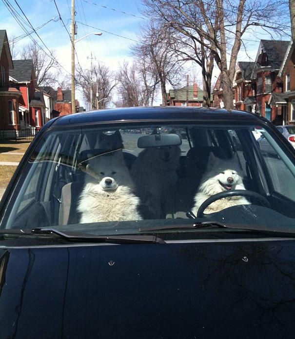 Hilarious Animals Making Fun Like Humans-16