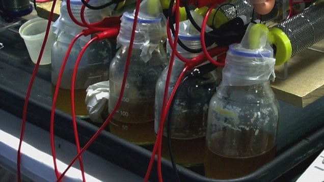 Human urine in fuel cells